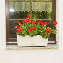 Vario-Fix Lechuza auf der Fensterbank mit Spannstange