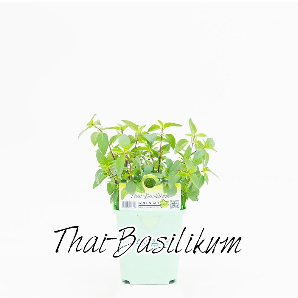 Thai-Basilikum Pflanze